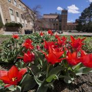 Red flowers outside University Memorial Center