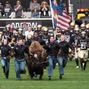 Ralphie takes the field.