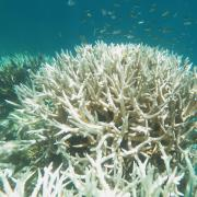 An image of bleached coral as seen in the Great Barrier Reef