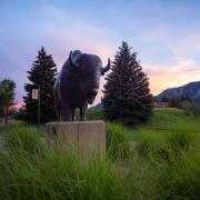 The Ralphie statue at sunset