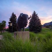Ralphie sculpture on campus