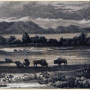 Illustration of the Colorado mountains, plains with buffalo