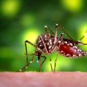 Mosquito biting a person.