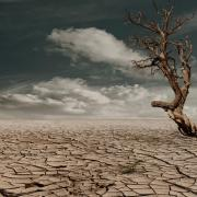 Arid landscape, clouds and dead tree