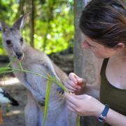 Student feeding a kangaroo in Cairns, Australia (Photo by Madison Sankovitz)
