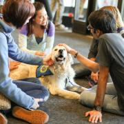 Students pet therapy dog on campus