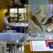 Student studies in the CU Museum's Biolounge