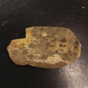 Bone fragment