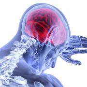 Red brain overlaid on skeleton