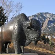 Buffalo statue in front of the Flatirons