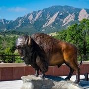 Buffalo statue atop CASE building