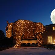 Buffalo light sculpture