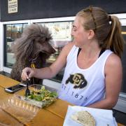 Grad student Clare Bradley takes lunch break with her standard poodle
