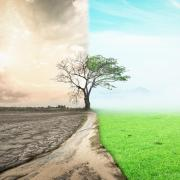 An image of a tree in a field depicting climate change and drought.