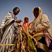 Women in East Africa look at a dead stalk of corn
