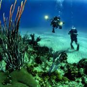 Scuba divers observe and film coral