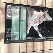 NEST Studio for the Arts