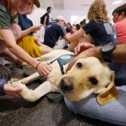 Students gather to pet therapy dog Cooper at Norlin Library