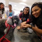 Students interact with Lilly, a toy poodle