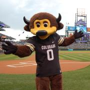 Chip stands on Coors Field in Denver, home of Colorado Rockies