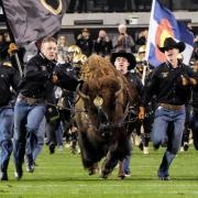 Ralphie and handlers storm the football field before game