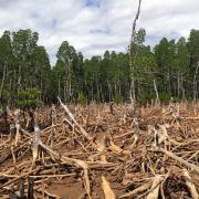Deforestation in Madagascar