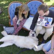 Students pet therapy dog Loki at a dog cafe on campus