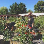 Students learn about sustainable food on local farm