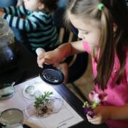 Child looks at plant through magnifying glass