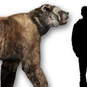 Example of a short-faced bears that stood 12 feet tall and weighed nearly a ton.