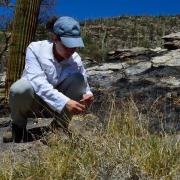 Postdoctoral researcher Emily Fusco researching invasive grasses and their effect on wildfires