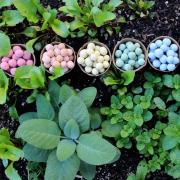 Garden with pots of seed bombs