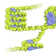 an illustration of a nucleosome