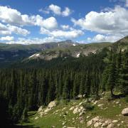 Trees on Niwot Ridge