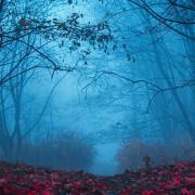 A dark path in foggy woods