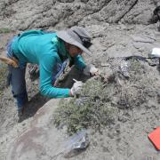 Karen Chin excavates fossilized dinosaur feces at Utah's Grand Staircase-Escalante National Monument