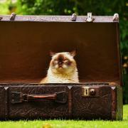 cat inside briefcase