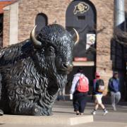 Buffalo statue at Folsom plaza