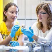 Researchers analyze mouse