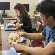 Students analyze human skull in Norlin Library