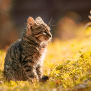 Cat sits outside on green grass