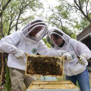 Rachael Kaspar and friend reveal the bees