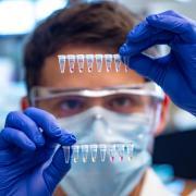 Postdoctoral research associate Nicholas Meyerson examines saliva samples