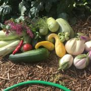 Garden produce harvested for the SEEC Cafe