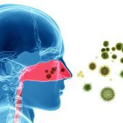 Illustration of scent entering human nose