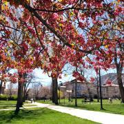 Spring on campus.