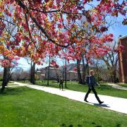 Spring blossoms at Norlin Quad, April 2017