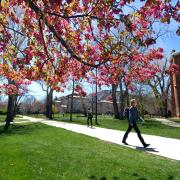 Campus community member walks by spring blossoms on a tree at Norlin Quad, April 2017