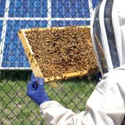 Doctoral student, bee expert Chelsea Cook inspects a hive