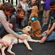 Students gather to pet therapy dogs